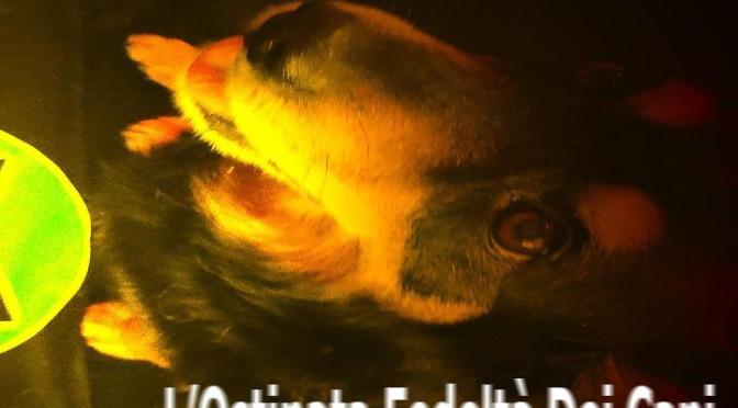 Mexcal – L'Ostinata Fedeltà Dei Cani